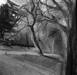 Three Trees, Kew Gardens by Joanna Brendon, Drawing, Charcoal on Paper
