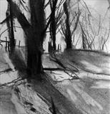Trees with Shadows, Richmond Park by Joanna Brendon, Drawing, Charcoal on Paper