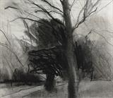 Two Trees, Kew Gardens by Joanna Brendon, Drawing, Charcoal on Paper